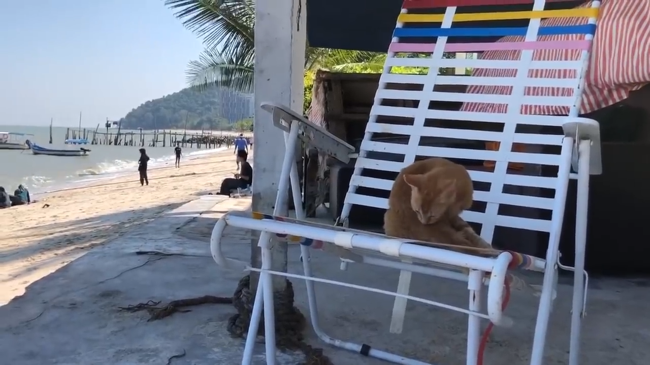 The Cat Beach