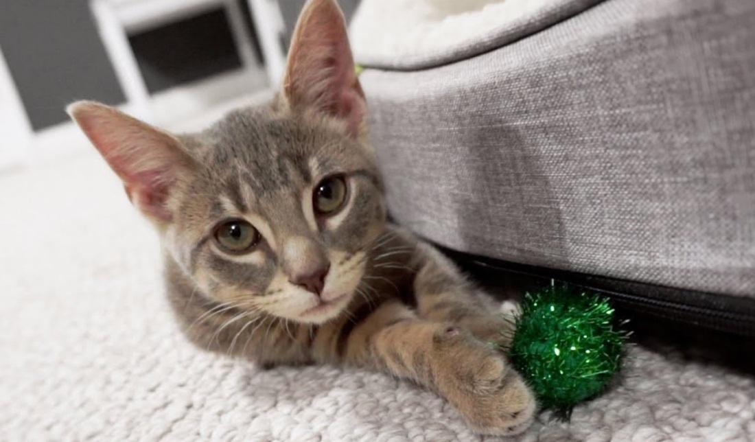 Family Adopts New Kitten