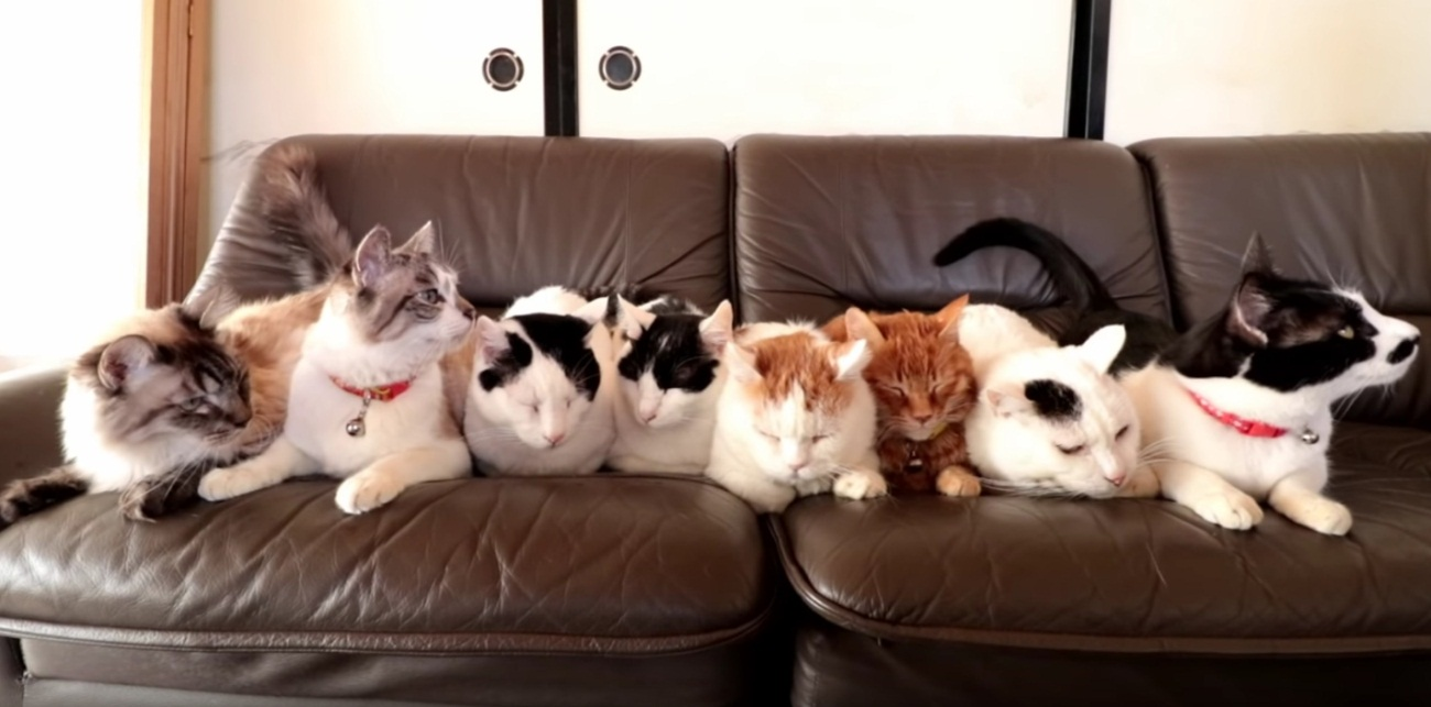 The Kitty Sofa