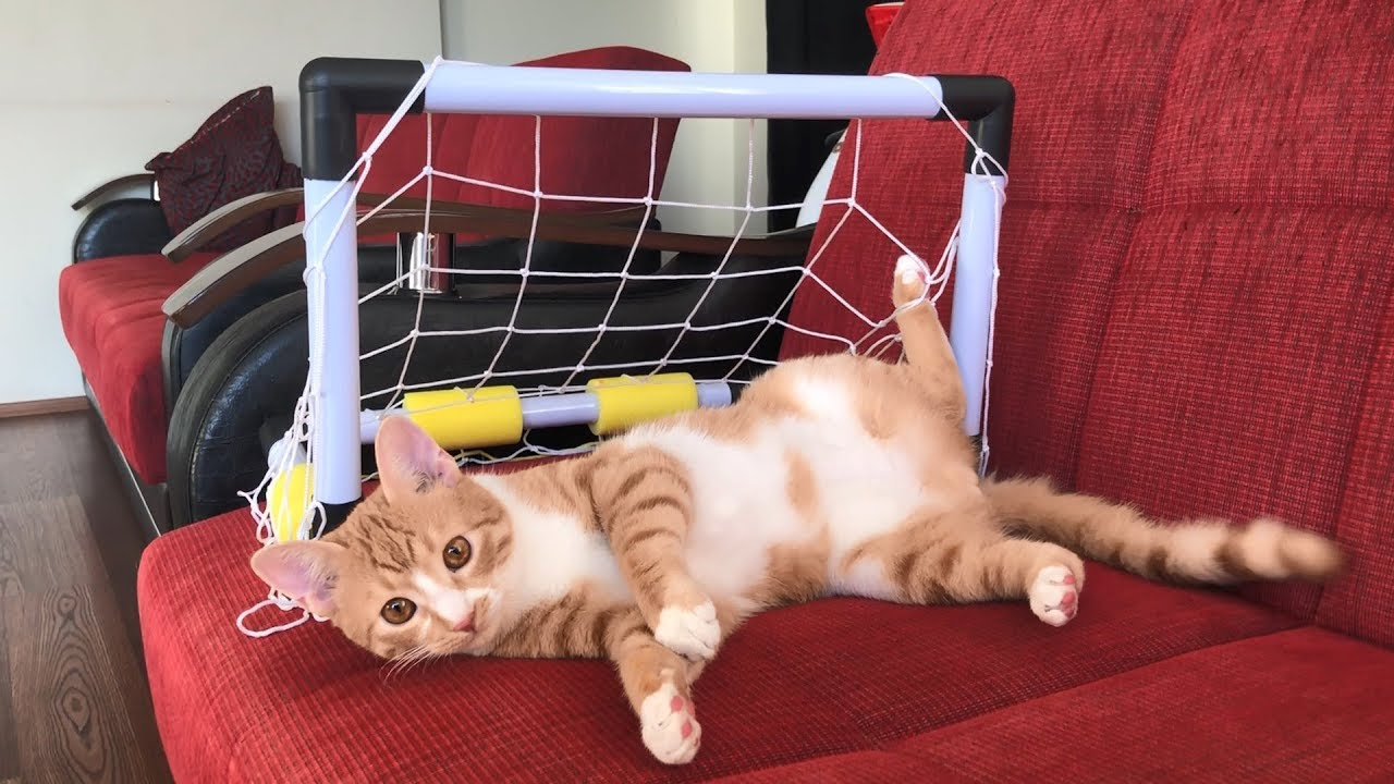 The goalkeeper kitty
