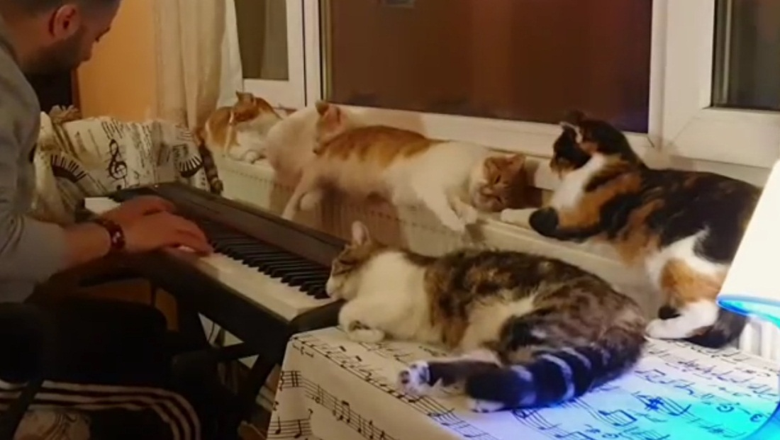 Good Night Song For His Cats