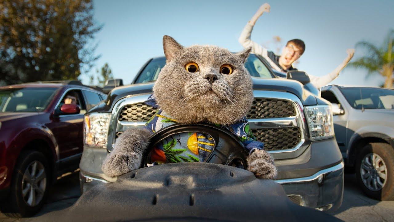 This cat is a true bro - Aaron's Animals