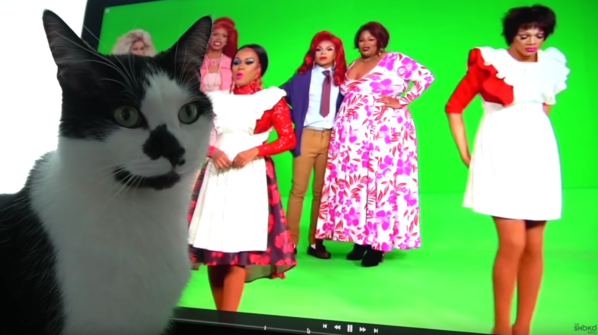 Curious Cat Watching Tv