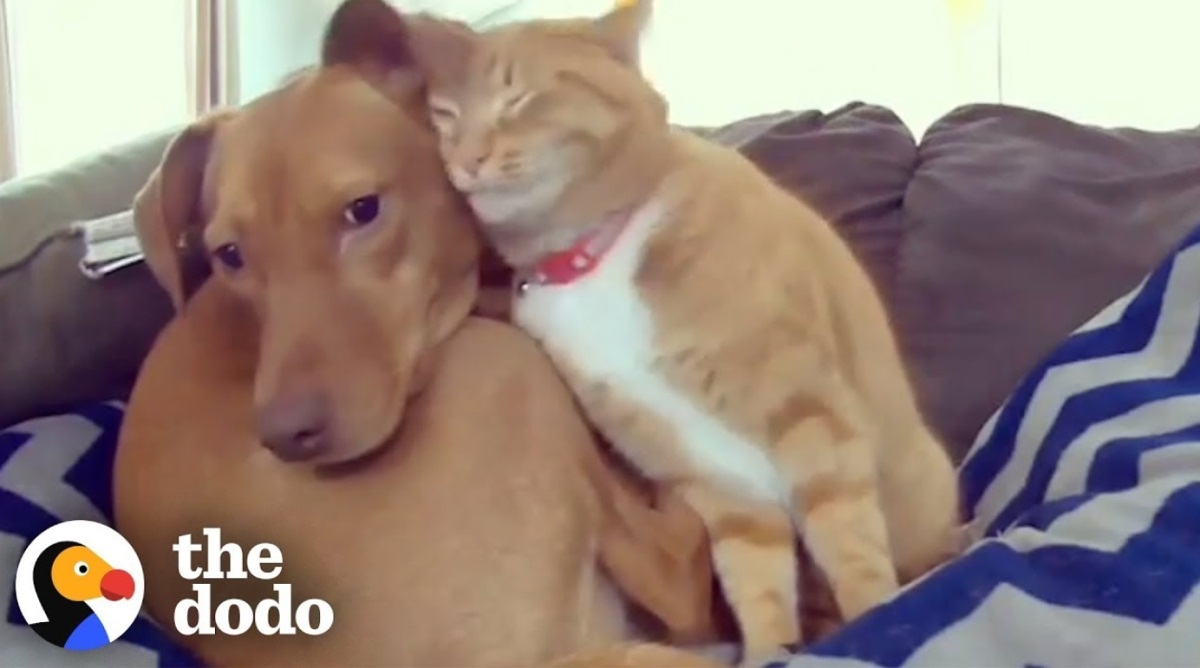 Hidden Camera Shows Cat And Dog Friendship