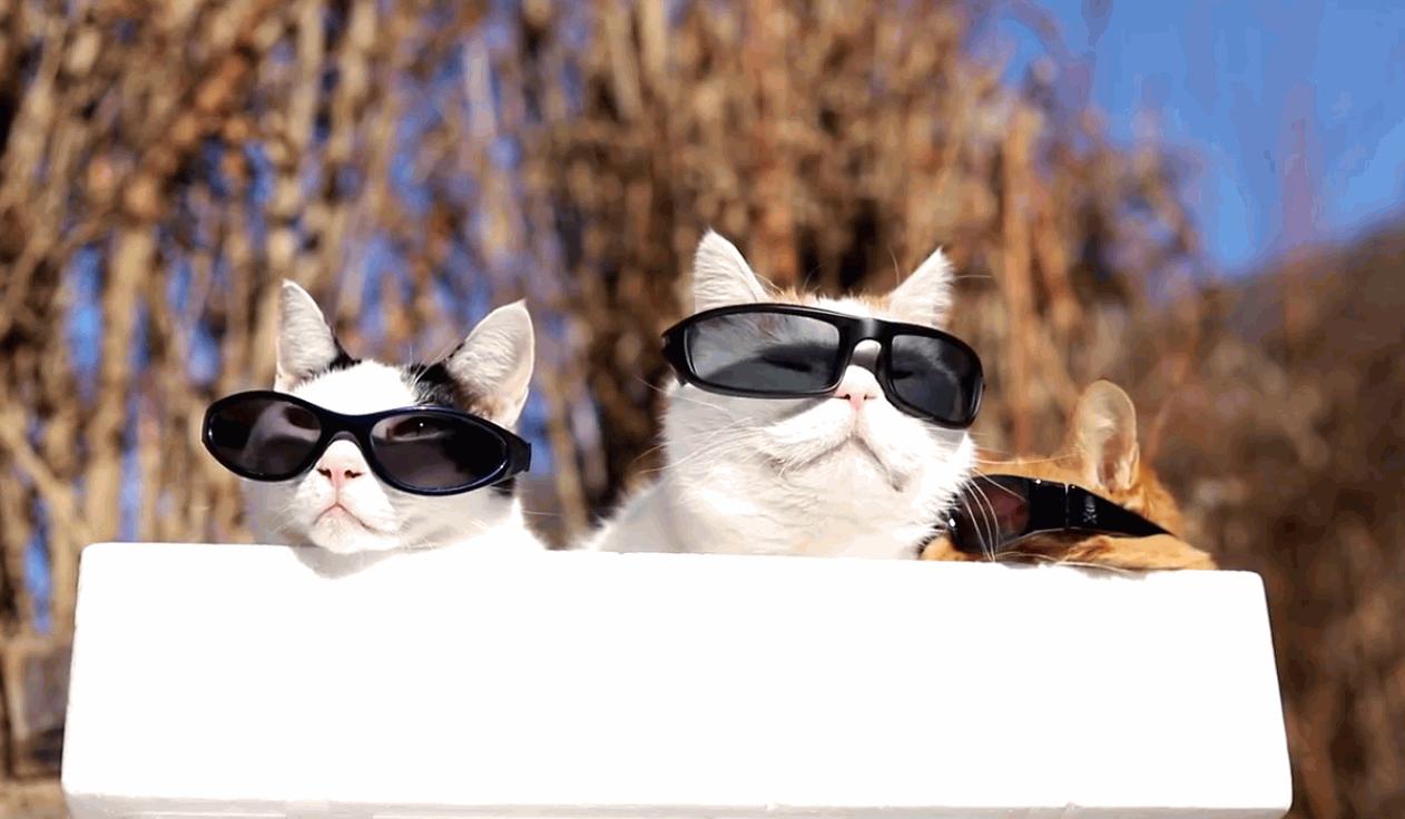 Cool Cats Sunbathing