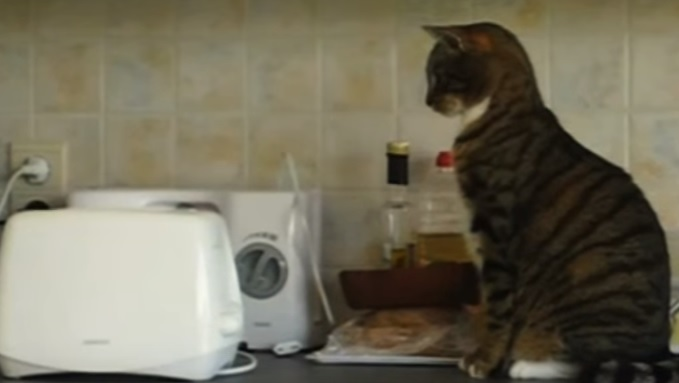 Cats Vs Toasters