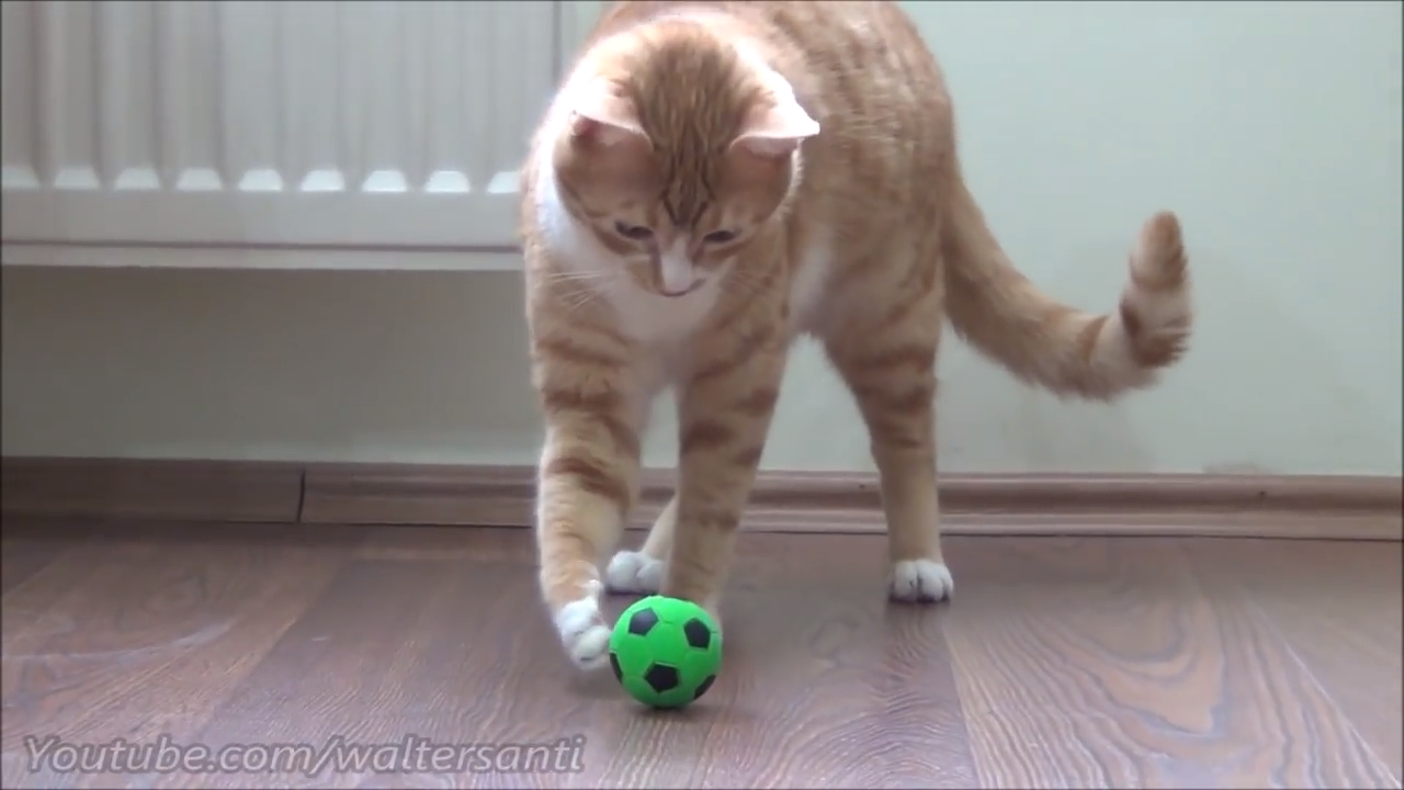 Playful kitten gets a ball upgrade