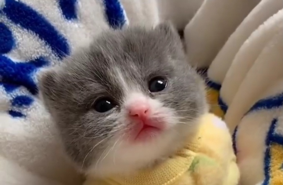 This Kitten Is Way Too Adorable