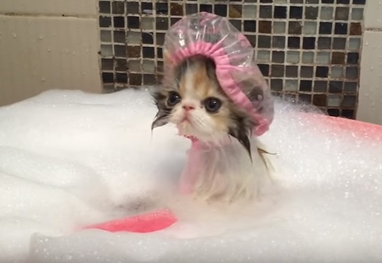 Cat Takes a Bath
