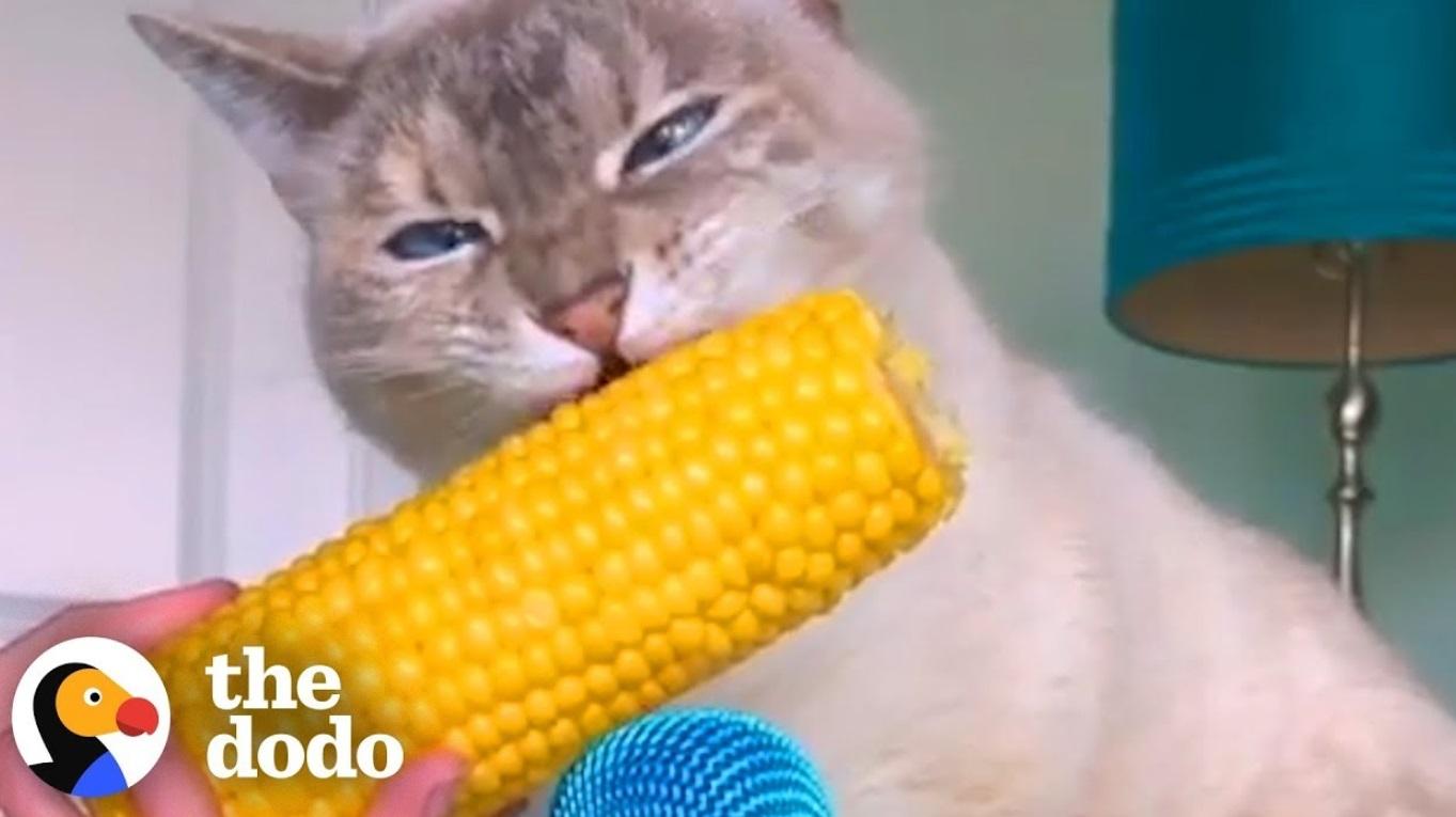 Cat ASMR Compilation