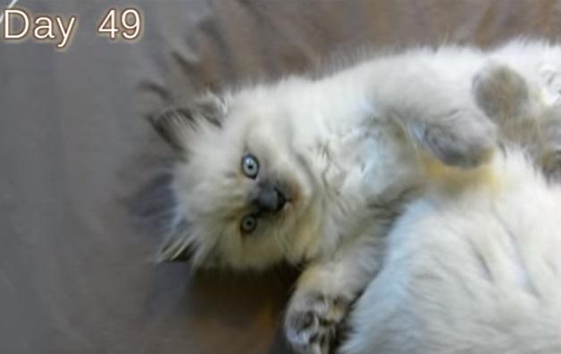 Kitten Time Lapse