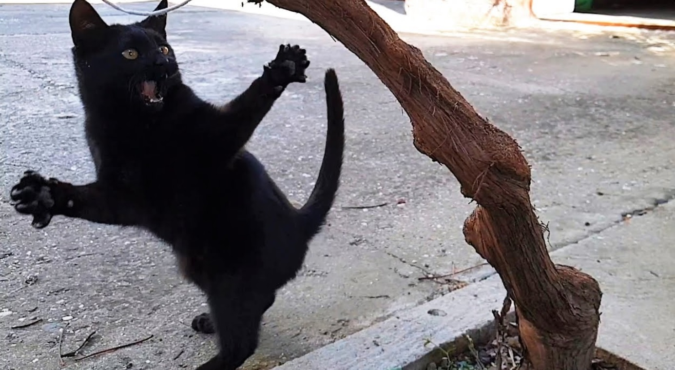 Playful Kitten In Slow Motion