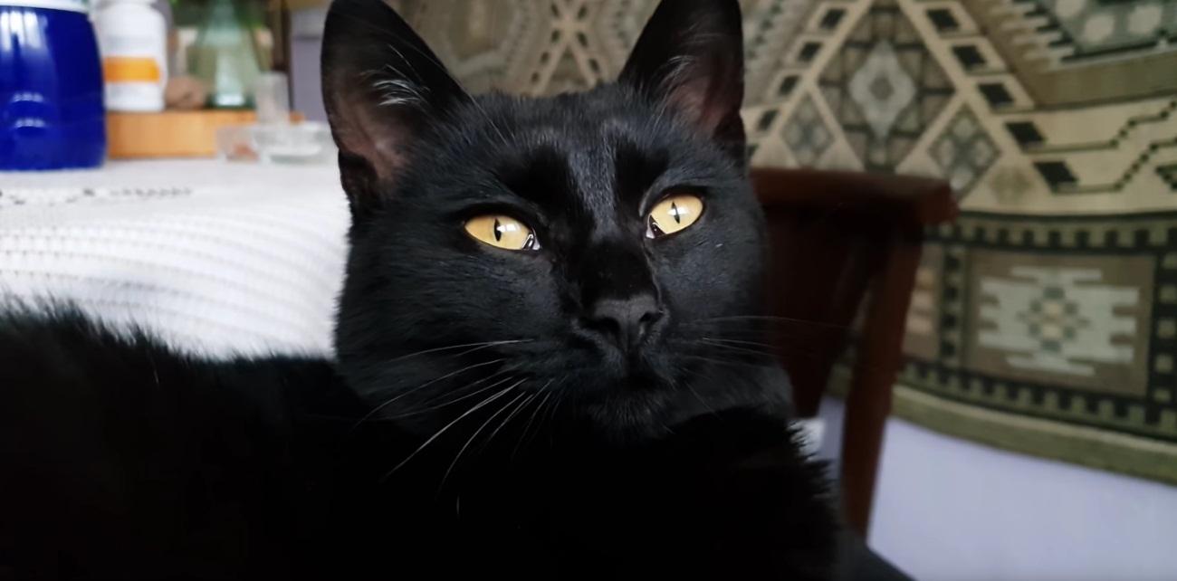 ASMR Cute Kitten Purring
