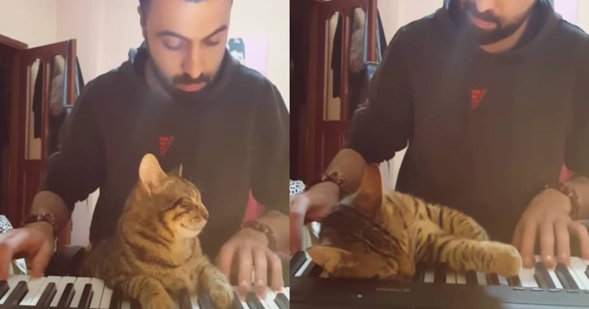 Cat Loves The Piano