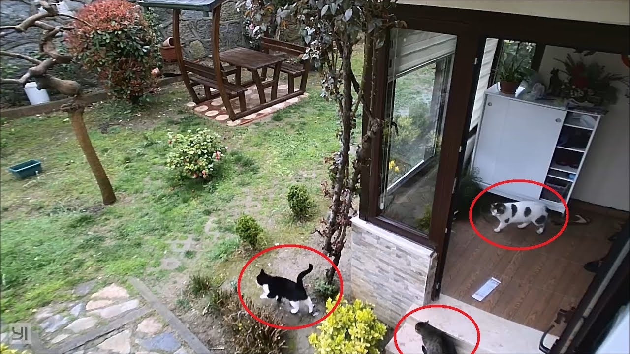 Mischievous cats caught in act