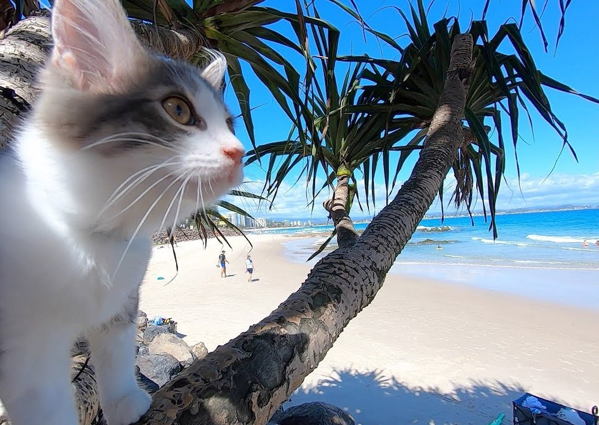 Cats have a relaxing day at the beach