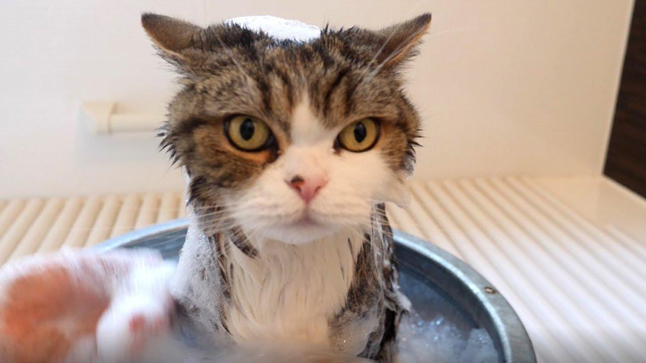 Maru Takes A Bath