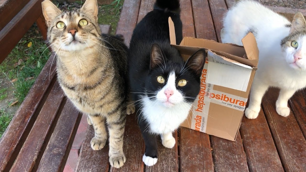 A special delivery for cats
