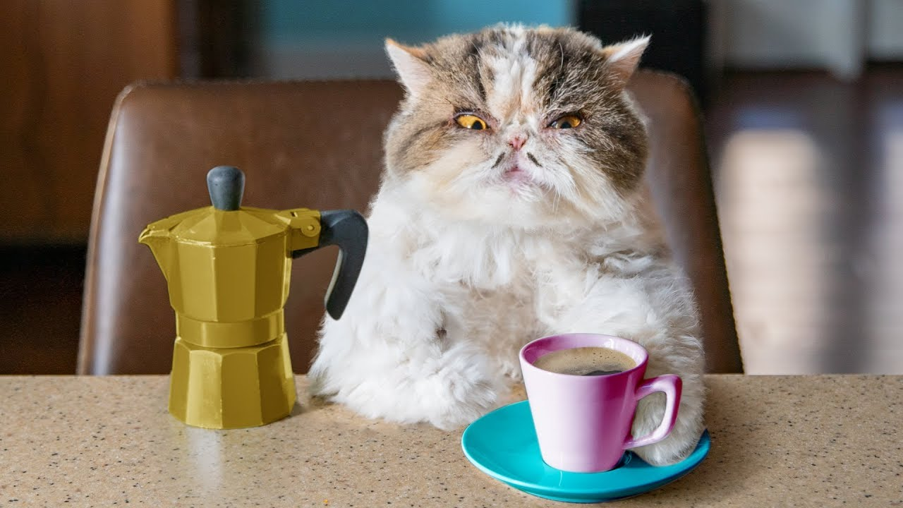 When a cat drinks coffee - Aaron's Animals