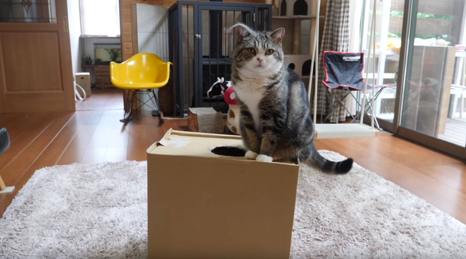 Maru Loves This Box