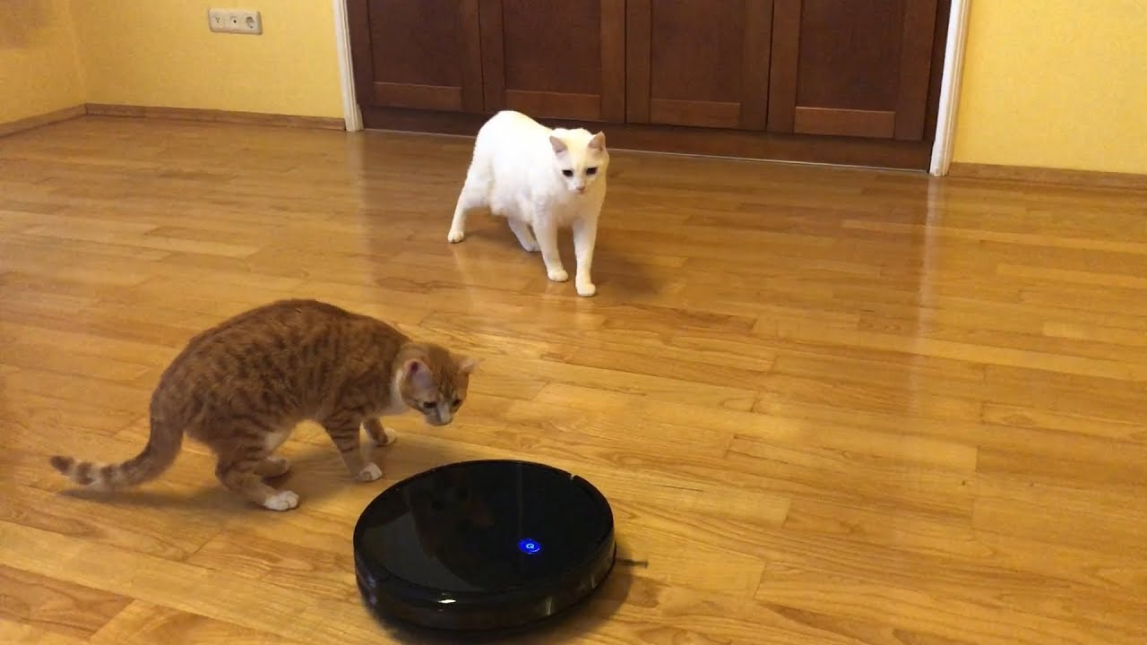 Cats Vs Robot Vacuum