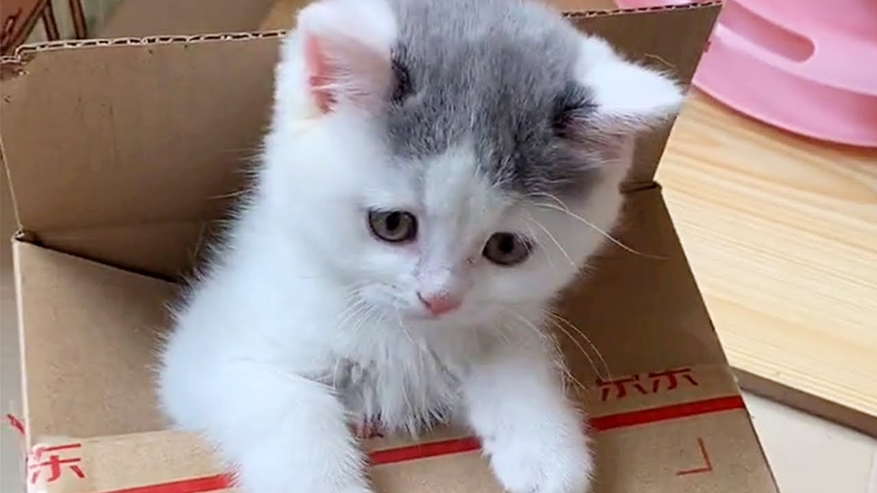 Kitten Loves Her Box