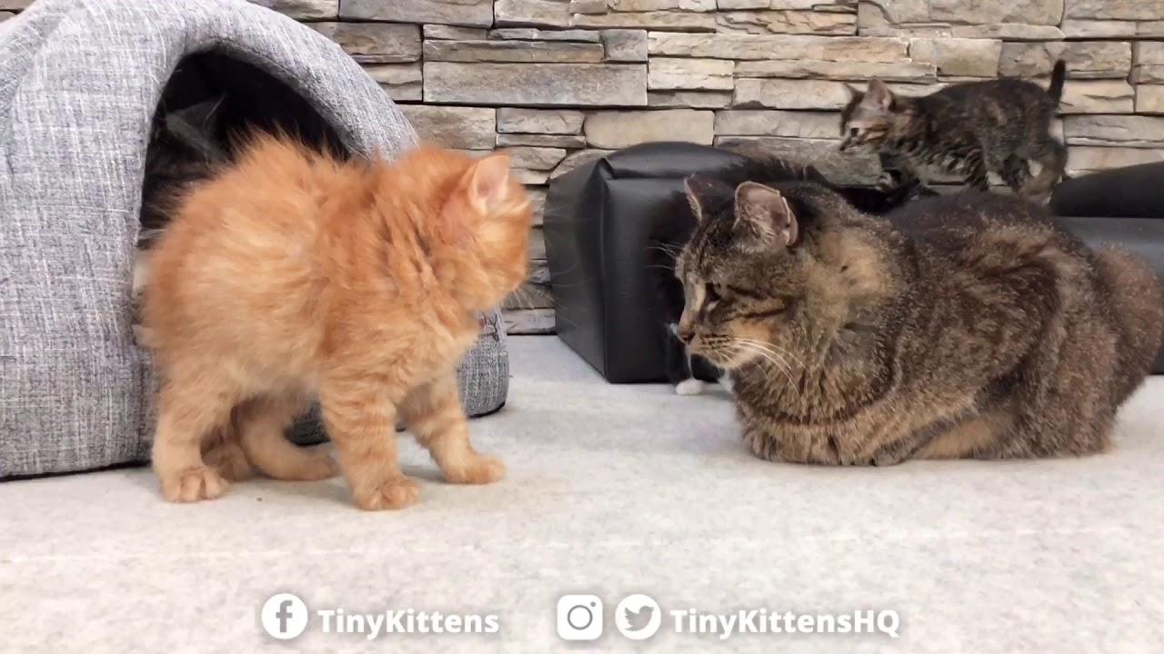 The terrifying kitten-puff!
