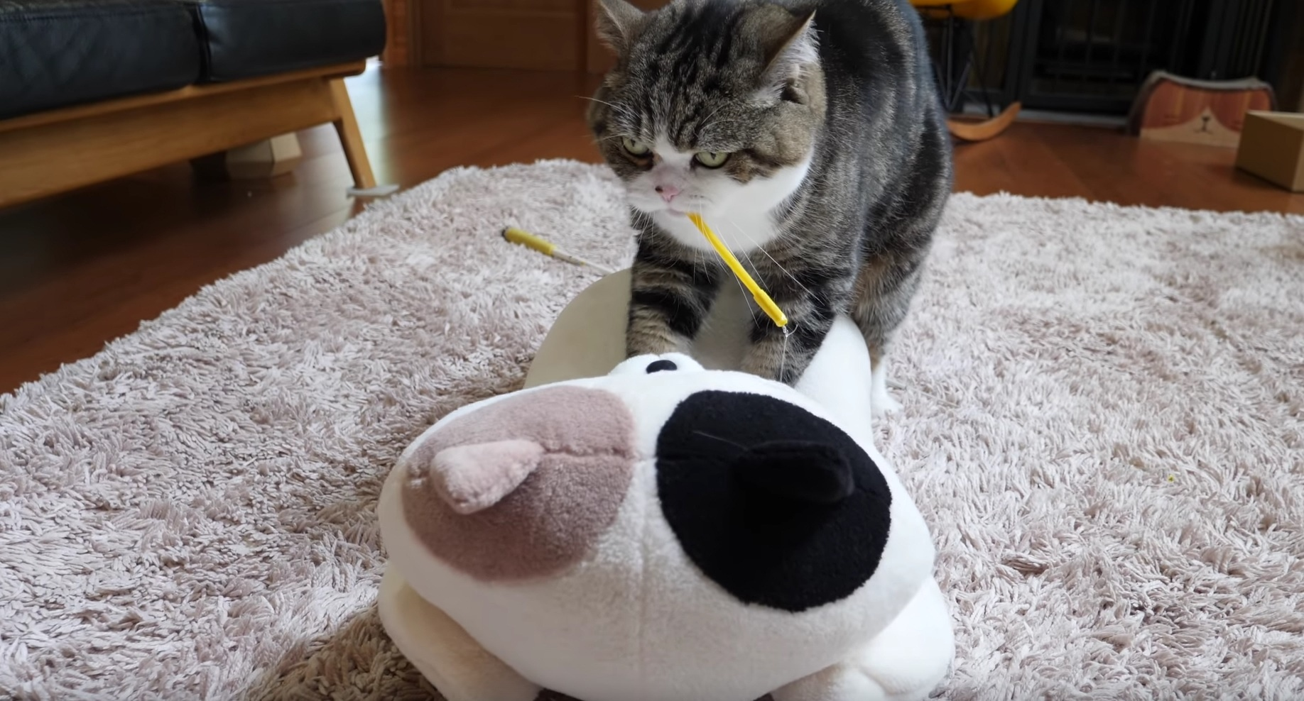 Maru Performs Special Massage