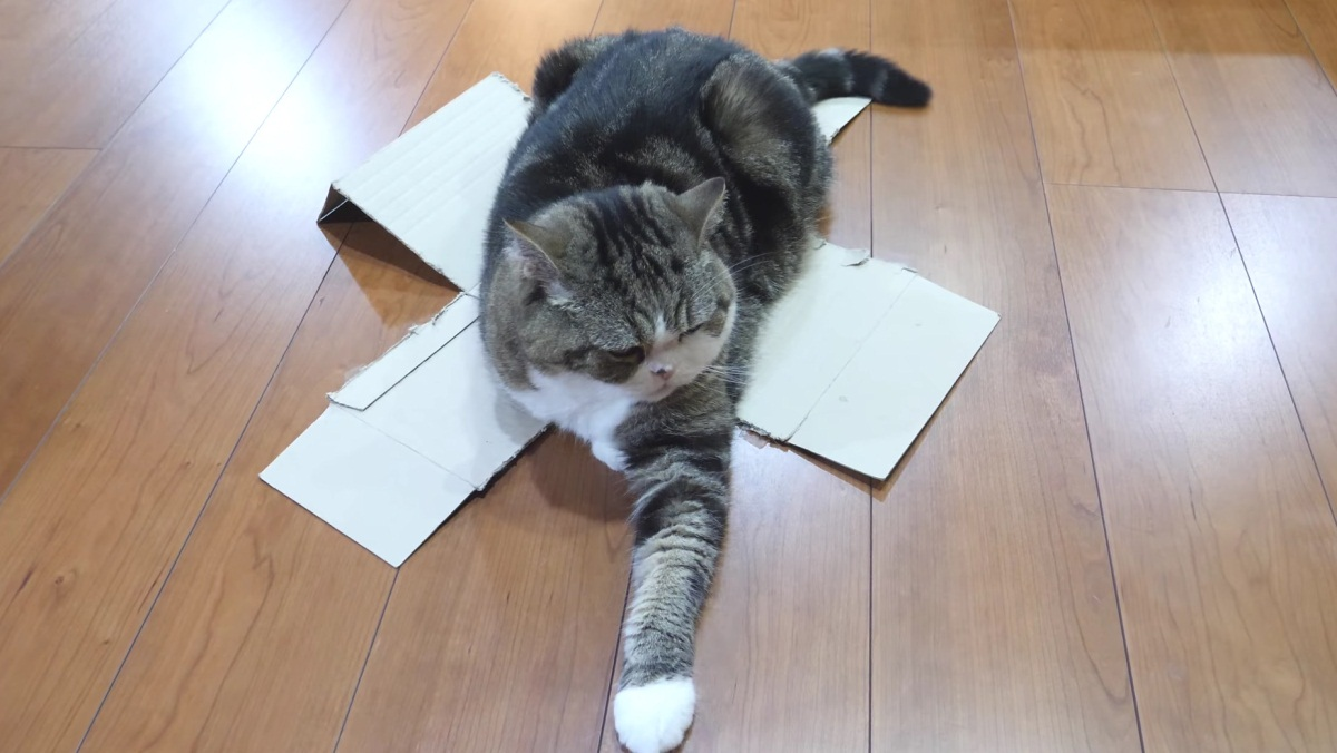 Pranking Maru With Weak Boxes