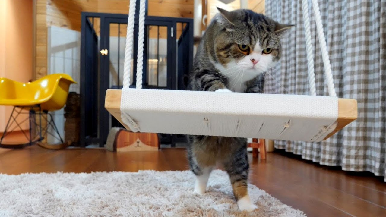 Maru And The Swing