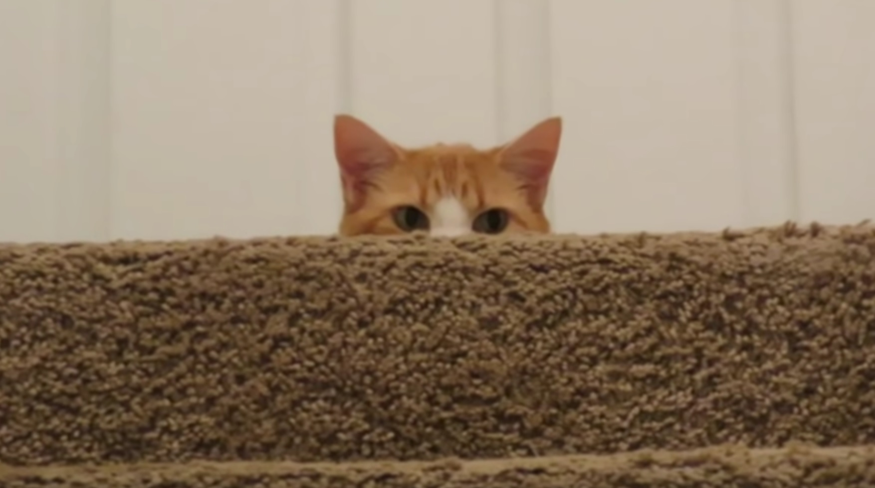 Butters The Cat Stalking