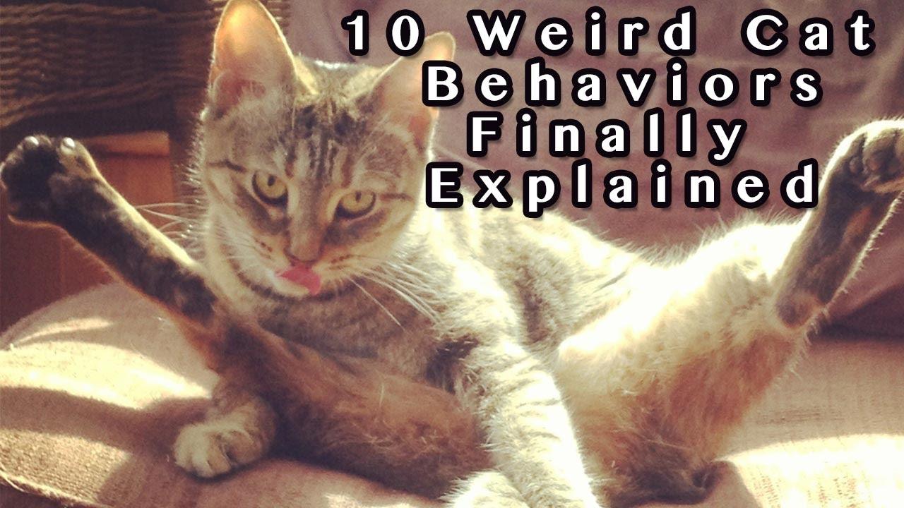 Weird Cat Behaviors Eplained