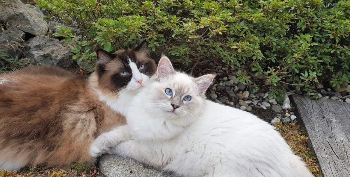 How These Cats Bonded Like Brothers