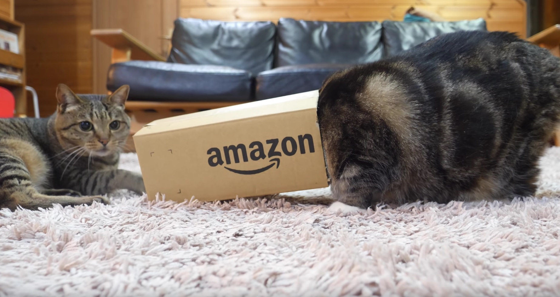 Maru Gets Into Box