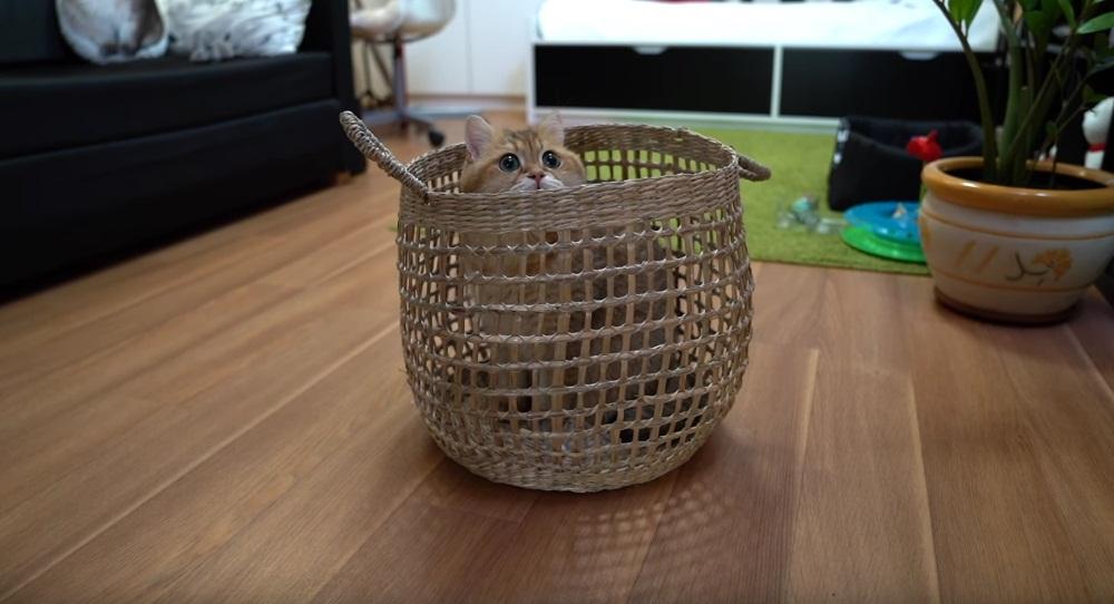Hosico Gets In The Basket