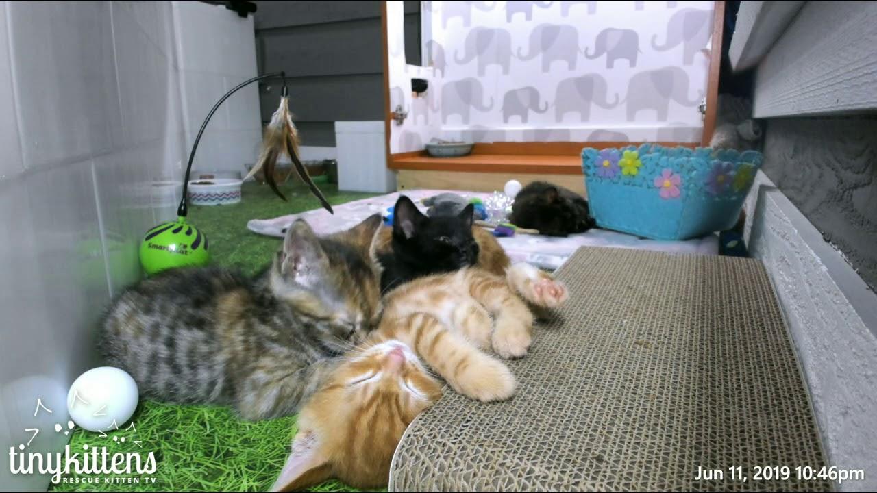 Living the true cat life...