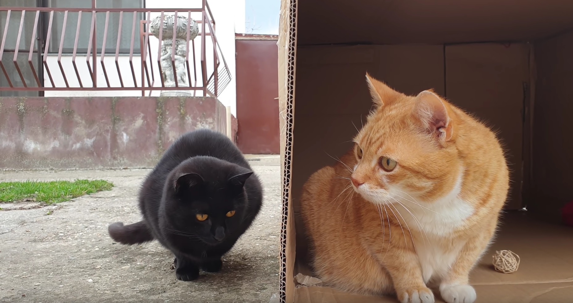 Cute Cats Play In Cardboard Box