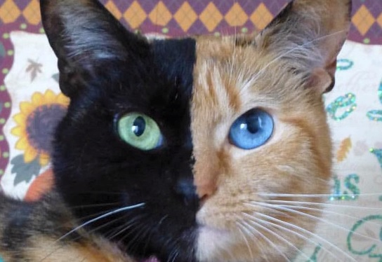 11 Unusual Cats You Won't Believe Exist