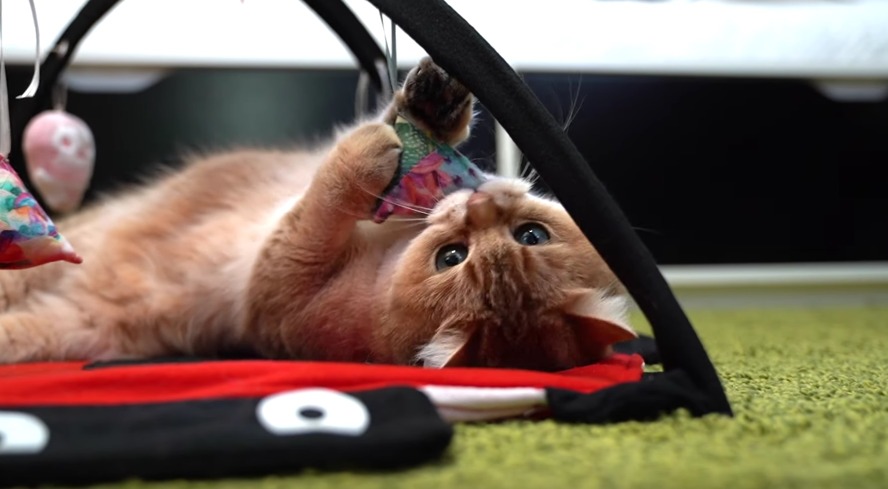 Hosico Playful Moment
