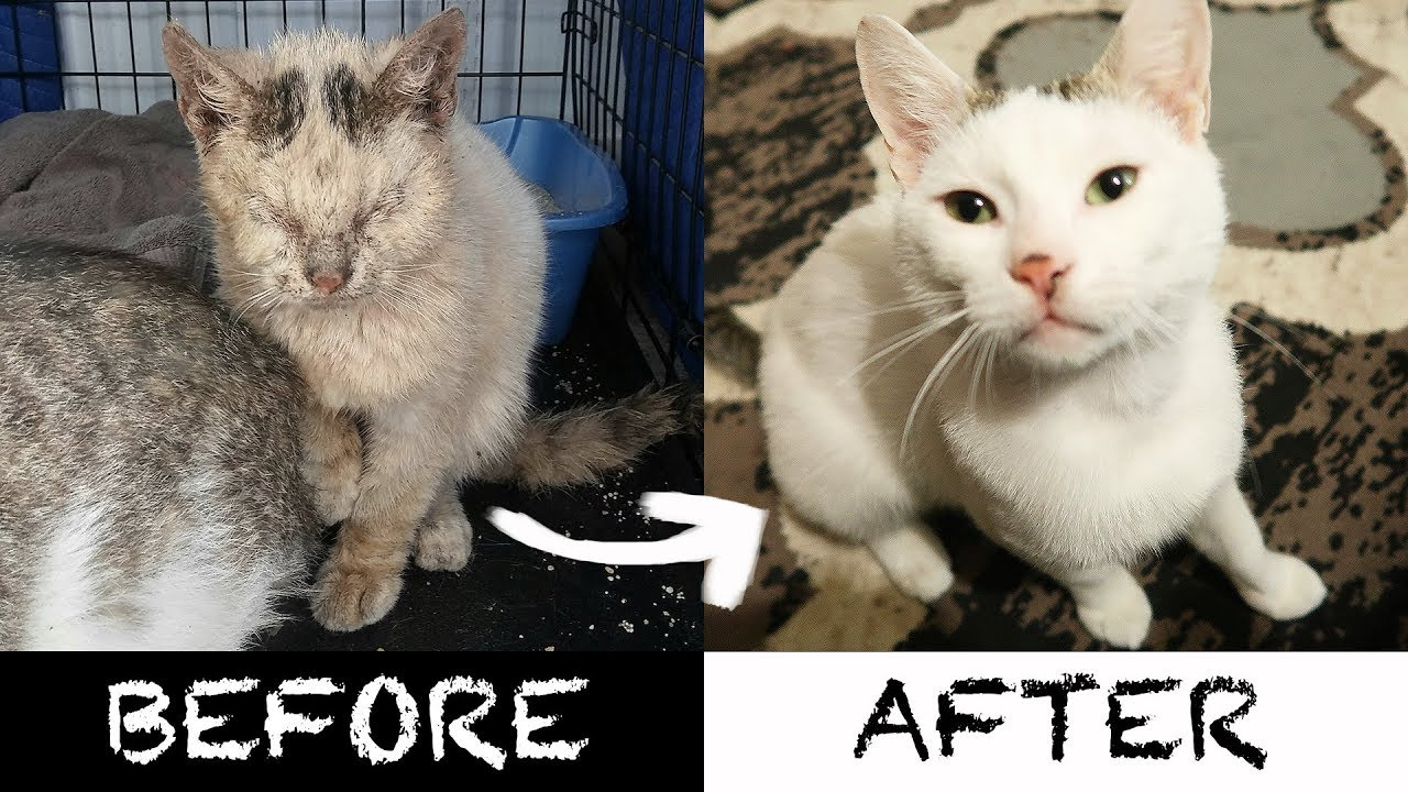 Two Amazing Homeless Cat Transformation