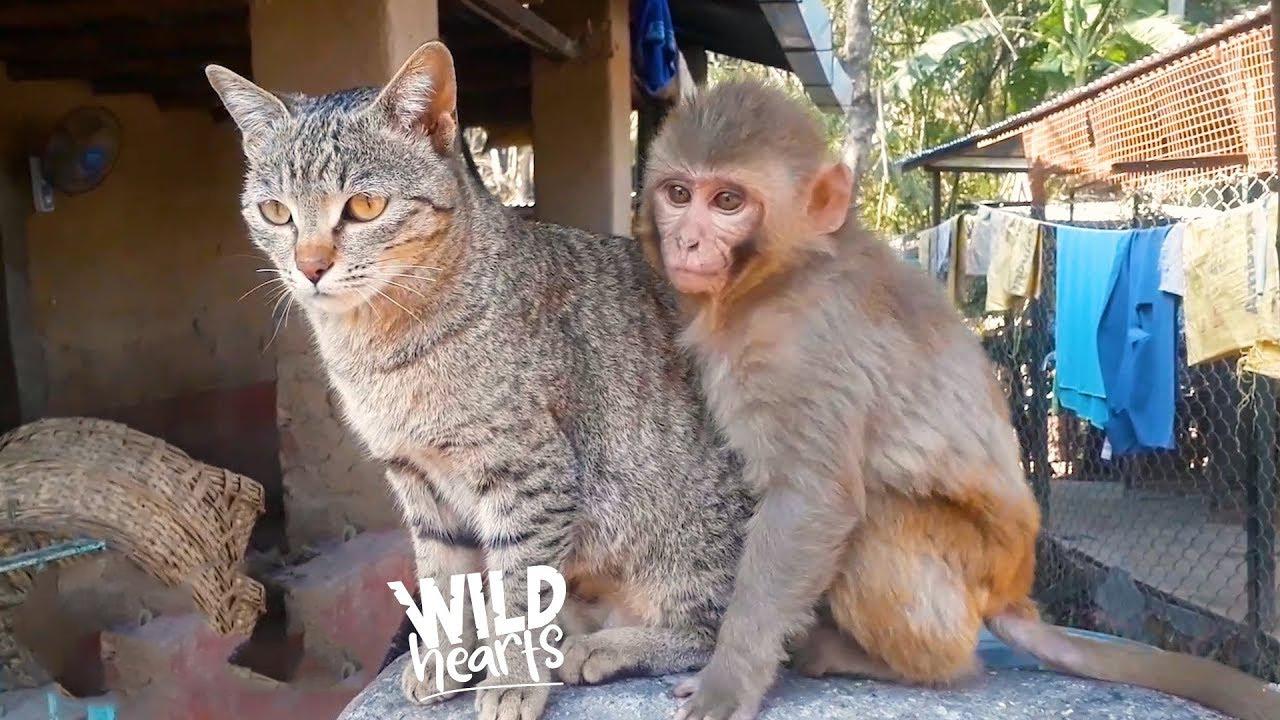 Two unusual friends