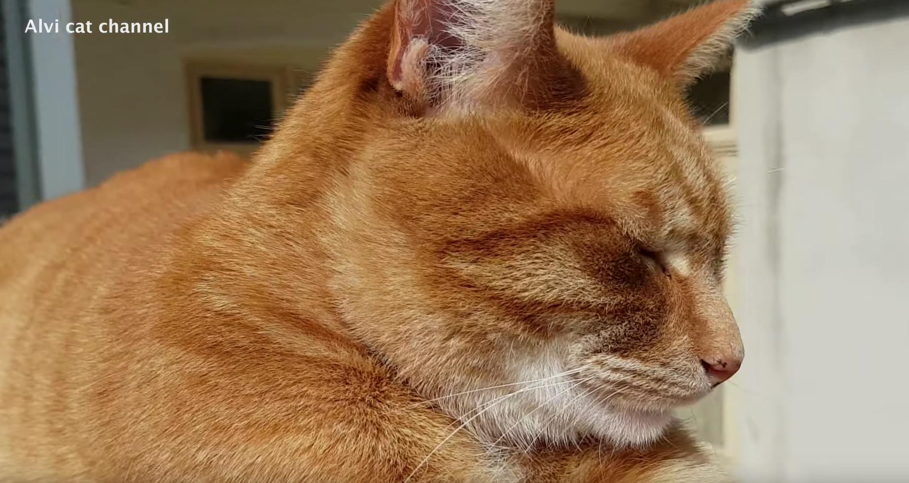 Cat Nose Facts With Alvi