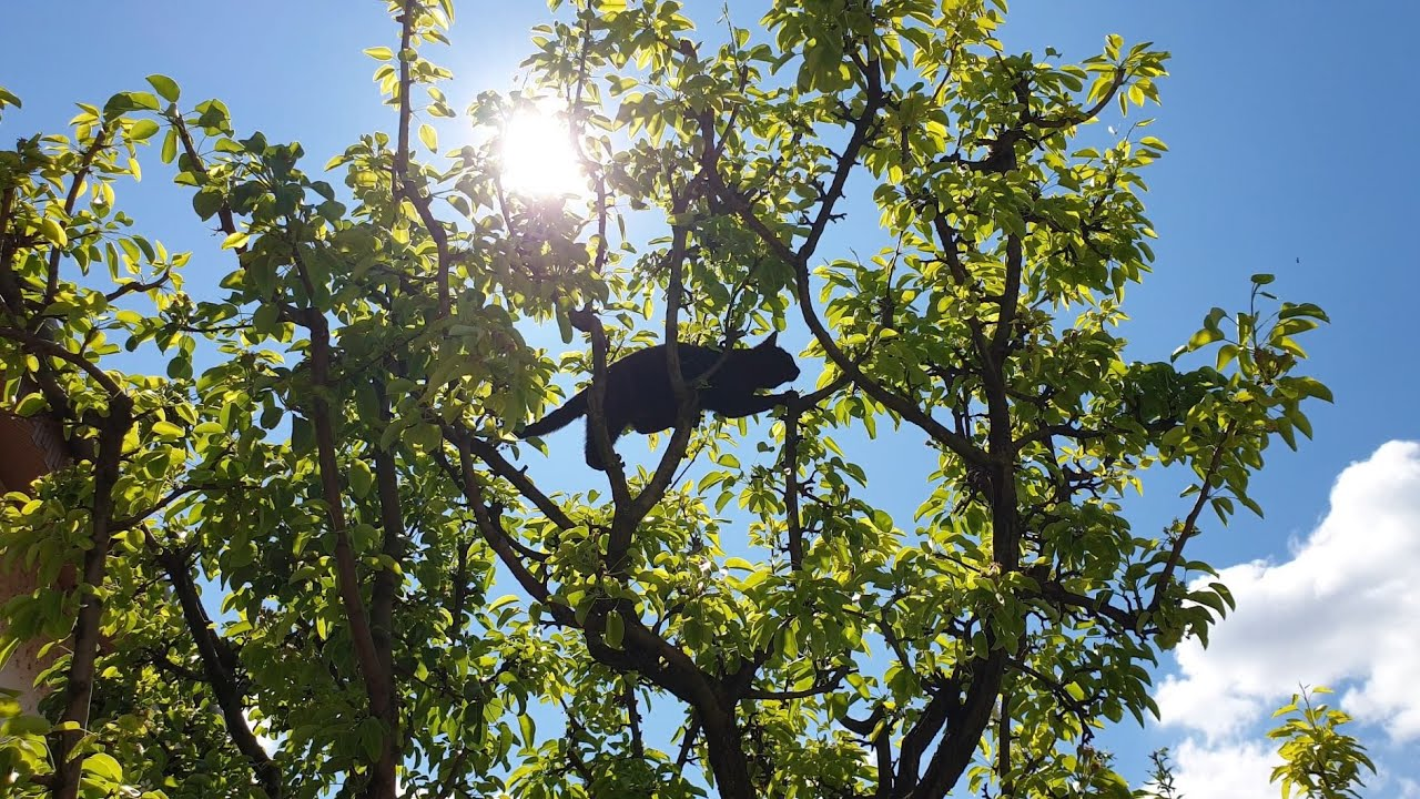 Little Black Panther Climbs Tree