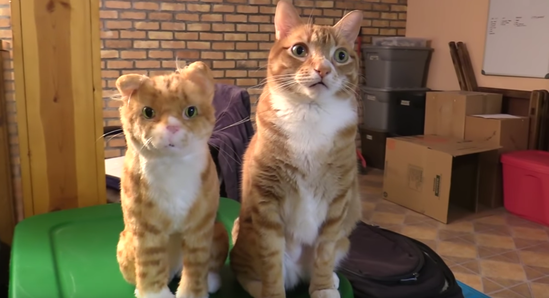 Cole And Marmalade React To Fake Cats