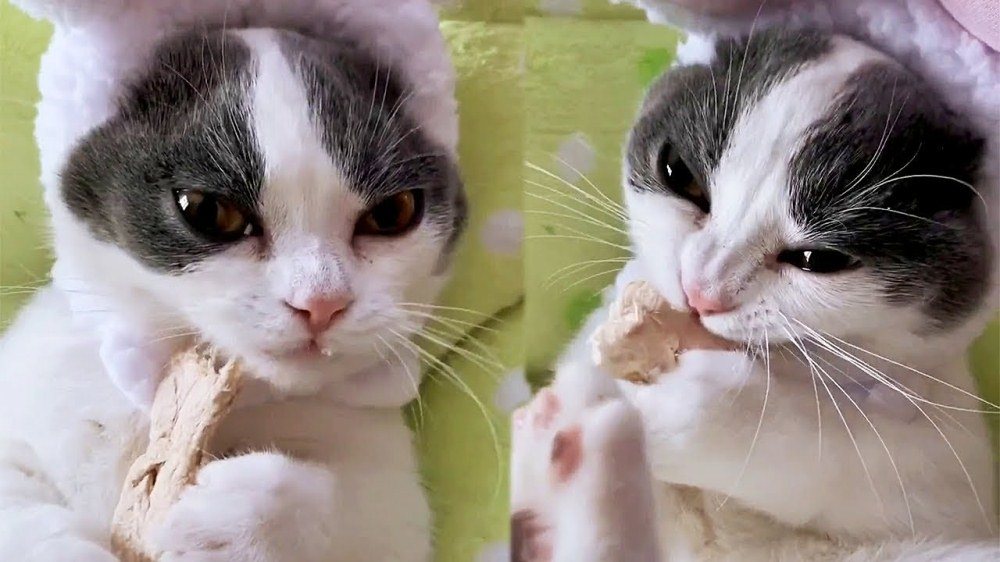 Cat Eating Dry Fish ASMR