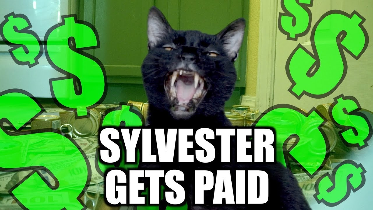 Sylvester's pay day! - Talking Kitty Cat
