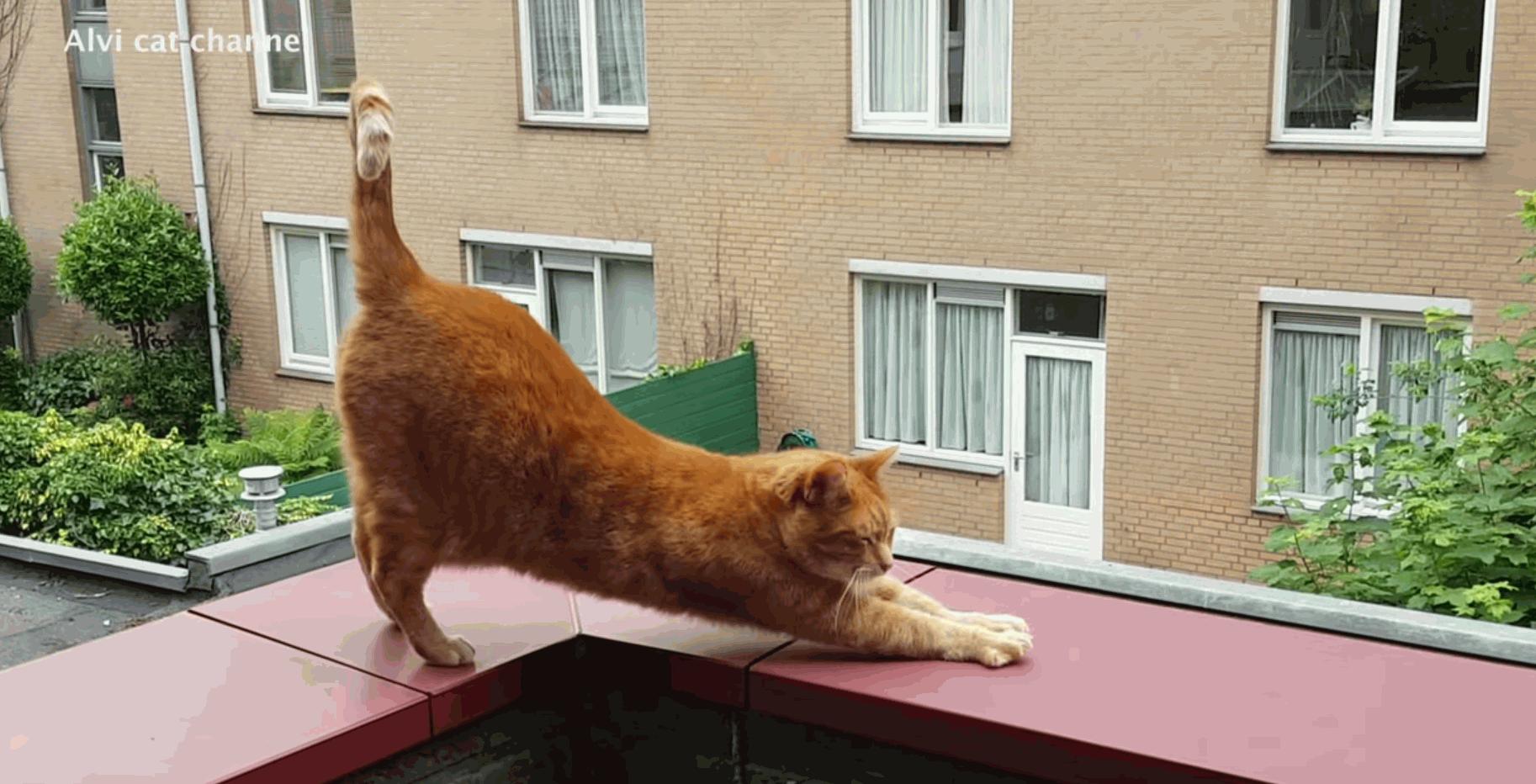 Alvi Cat His 10 Cutest Poses