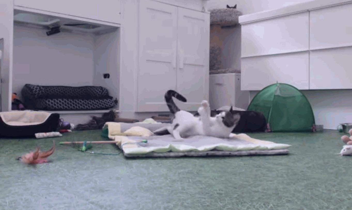 Cat practicing her huntress skills