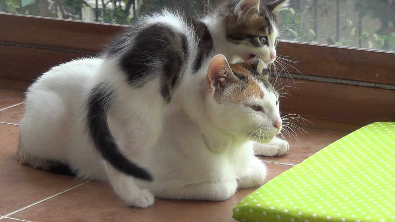 Patient Mother With 5 Crazy Kittens