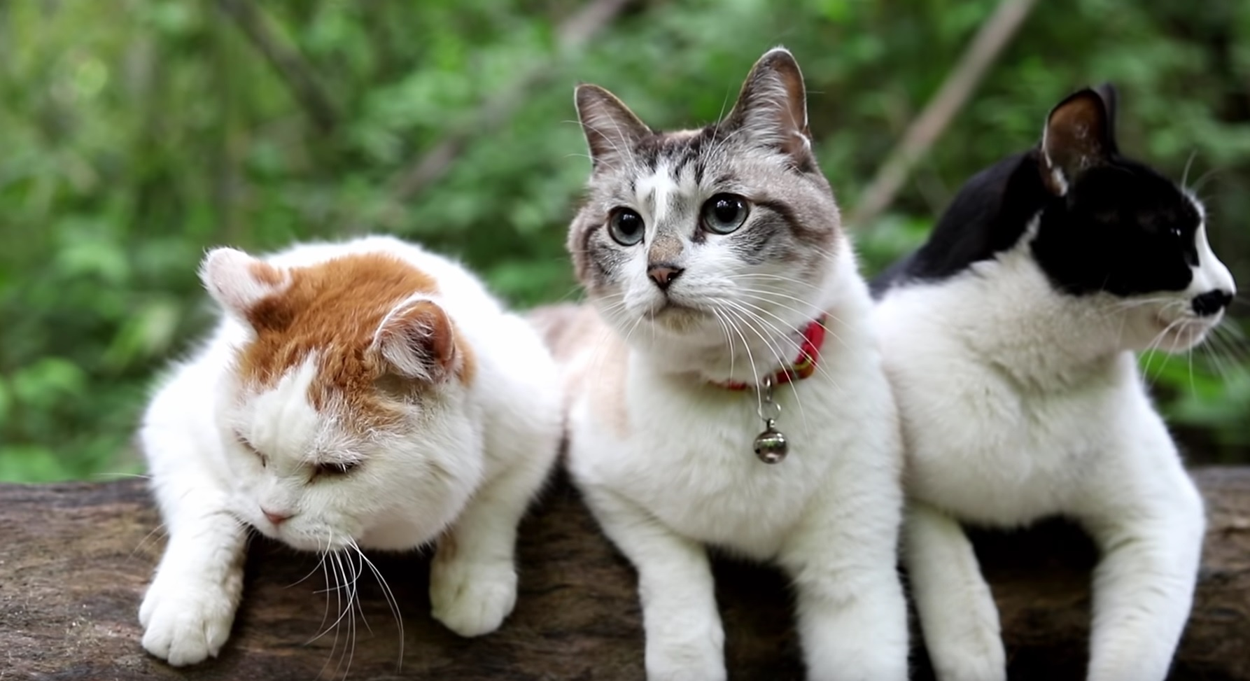 Cats Hanging Out In Nature